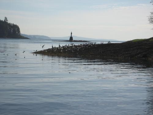 Lummi Island Wa Ferry Schedule